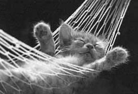Relaxing Cat