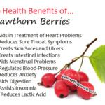 Hawthorn Berries - EatHealthyLiveFit.com