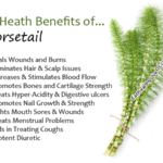 Horsetail - EatHealthyLiveFit.com