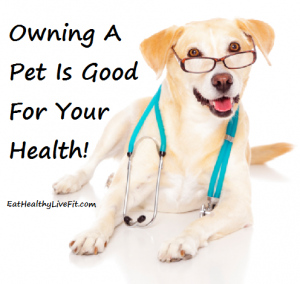 owning pets good for your health doc dog   eathealthylivefit