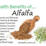 Alfalfa - eathealthylivefit.com