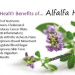 Alfalfa-Herb - EatHealthyLiveFit.com