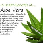 Aloe-Vera eathealthylivefit.com