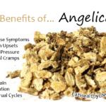 Angelica-Root - EatHealthyLiveFit.com
