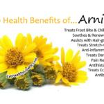 Arnica - EatHealthyLiveFit.com