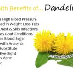 Dandelion - EatHealthyLiveFit.com