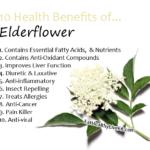 Elderflower - EatHealthyLiveFit,com