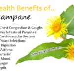 Elecampane - EatHealthyLiveFit.com