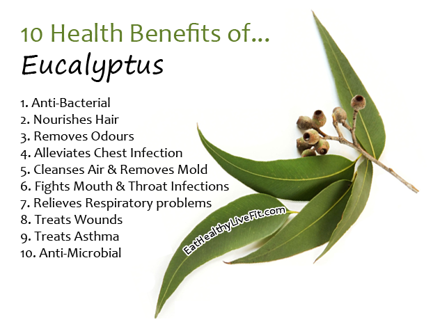Eucalyptus leaves and health benefits