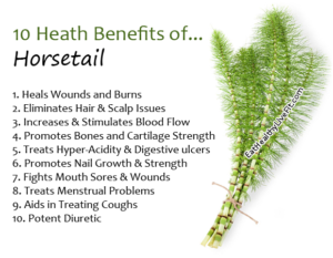 Horsetail benefits for hair